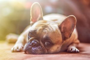 Urinalysis for Pets