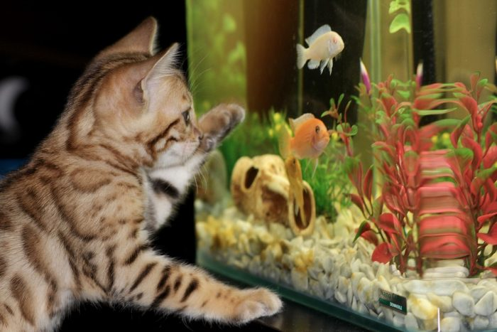 Taking Care of an Aquarium